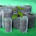 PLANTEPOSER 100 stk