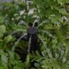Micro sprinkler FJW6002A